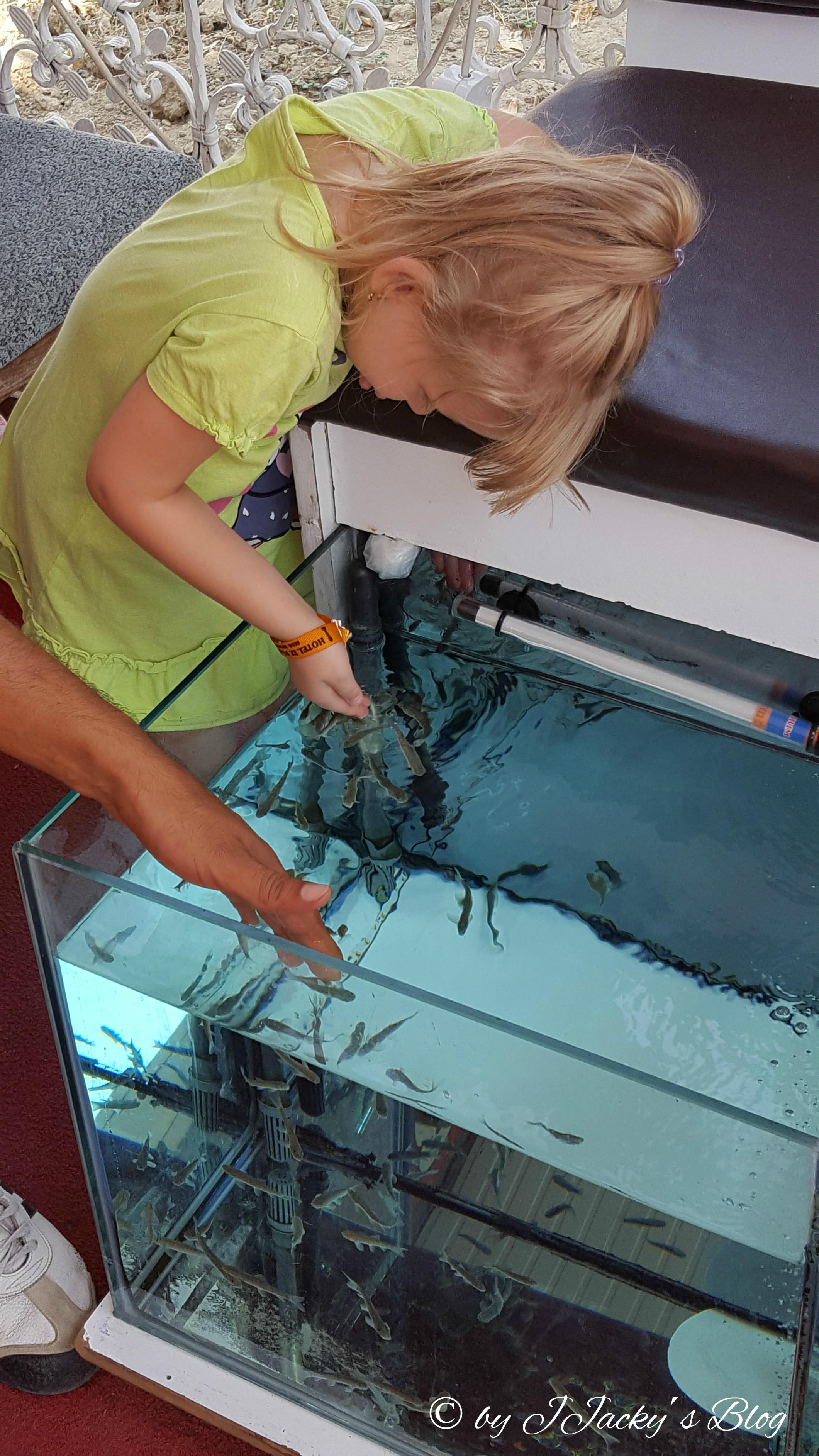 Emi ist fasziniert von den kleinen Fischen
