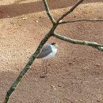 Vogelpark