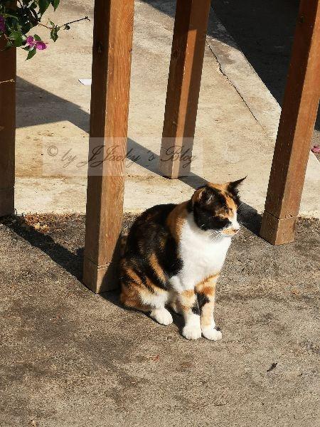 Georgepoulis Cat
