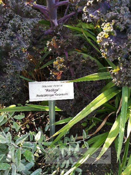 Flora 2 Britzer Garten