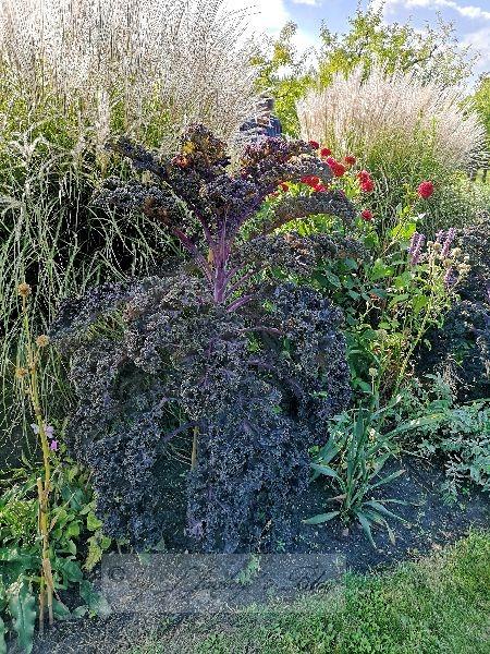 Flora Britzer Garten