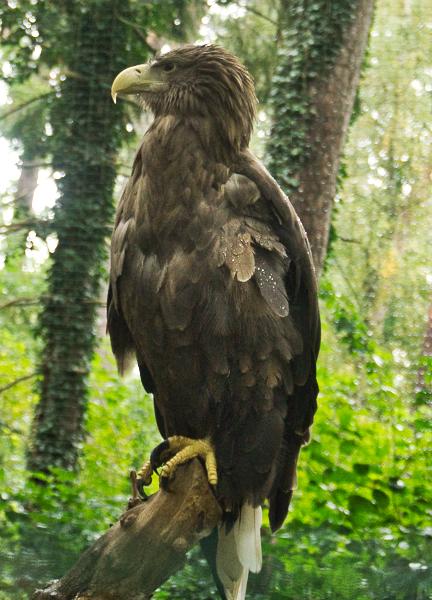 Zoo Adler
