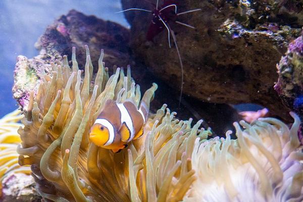Zoo Wasserwelt