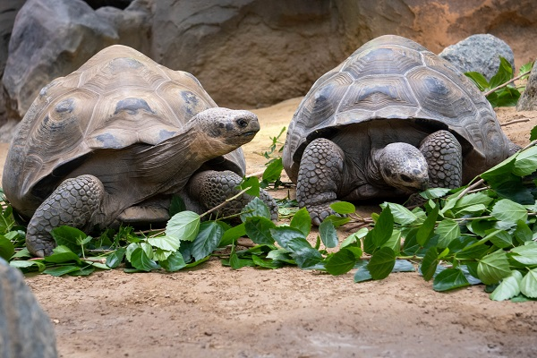 Zoo Schildkröten